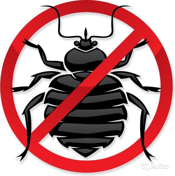Предложение: Дезинсекция. Обработка тараканы, клопы,