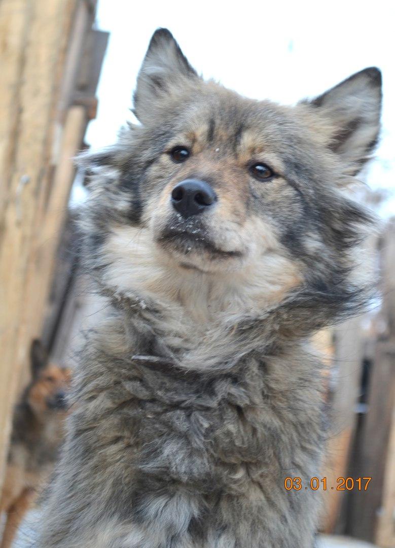 Продам Собака Мишель - умна,красива