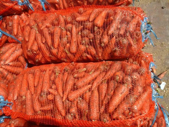Продам Оптовые поставки, сочной, моркови.
