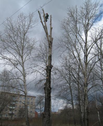 Предложение: Спилить деревья в Жуковском, Раменском