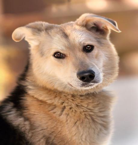 Отдам даром Тим - легендарный пес из календаря!