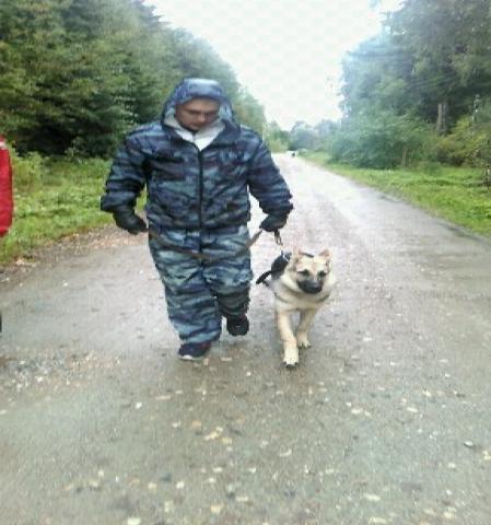 Предложение: дрессировка и коррекция поведения собак