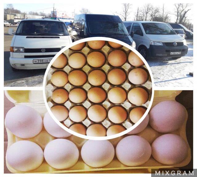 Продам Яйца оптом