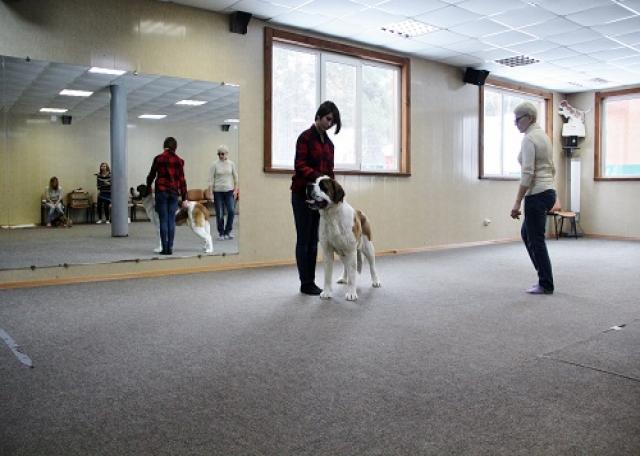 Предложение: Шоу-тренинг и ОКП для всех пород собак