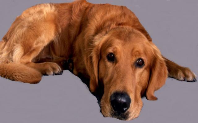 Предложение: дрессировка собак