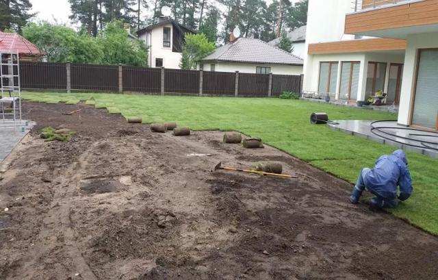 Продам: Рулонные газоны.Посев газонной травы.