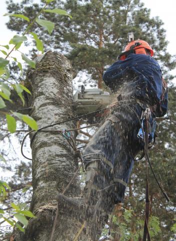 Предложение: Спилить деревья в Домодедовском районе.