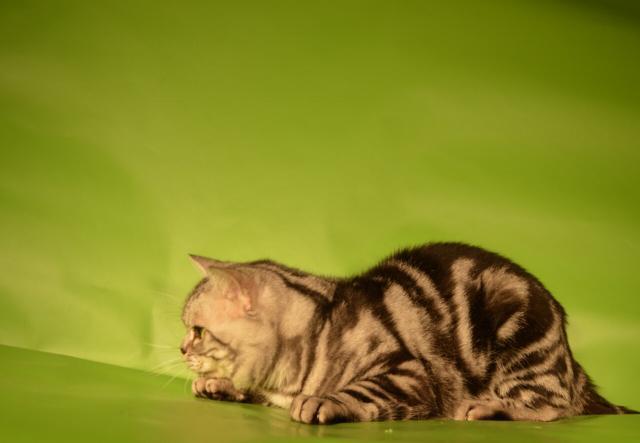 Предложение: Котята