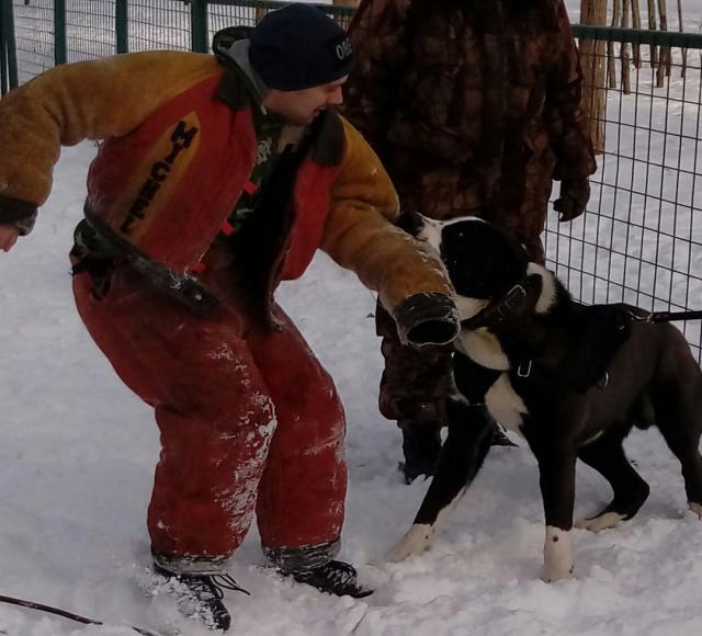 Предложение: Дрессировка собак с выездом
