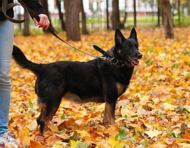 Отдам даром Славная душевная собака Найда в дар