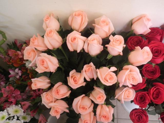 Продам цветы изГолландии