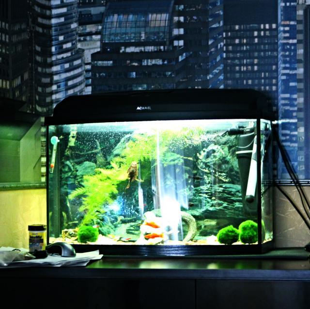 Продам Аквариум aquael classic 60 со всеми комп