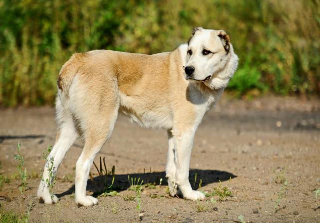 Отдам даром Собака – компаньон Алекса в дар