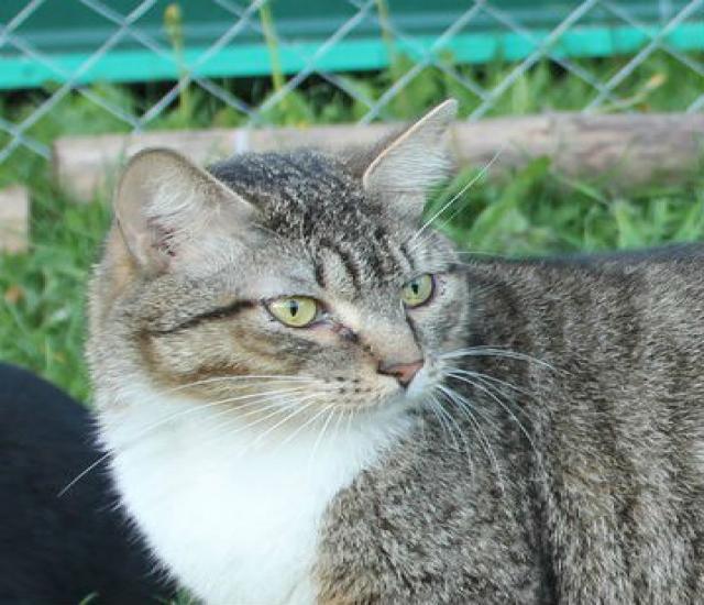 Отдам даром Ищем дом коту Сардору из монастыря.