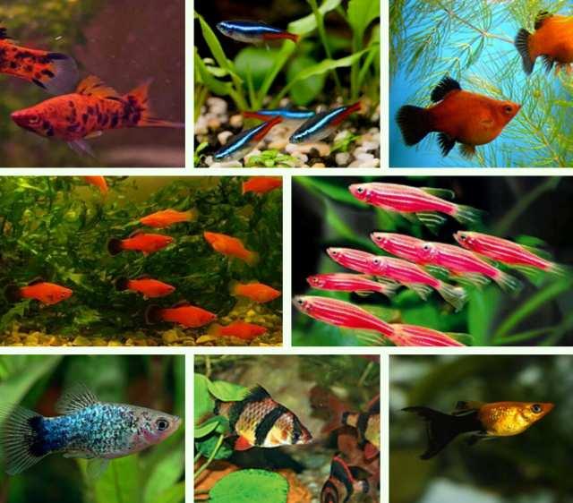 Продам Красивые мирные аквариумные рыбки Разные
