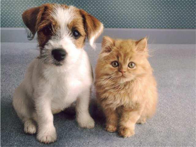 Продам Биокорректоры для здоровья животных