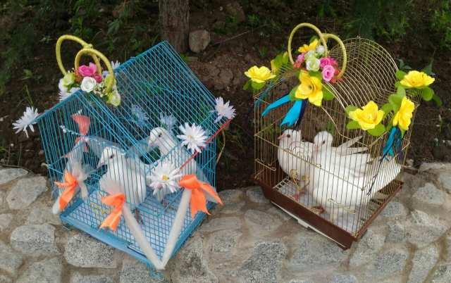 Продам Белые голуби