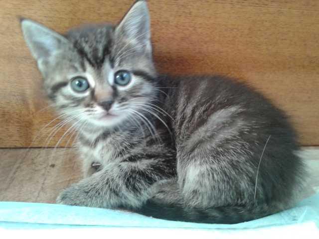 Отдам даром (одна кошечка и два котика)