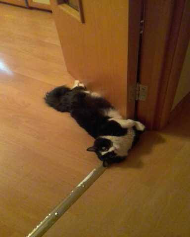 Предложение: котик ищет кошечку