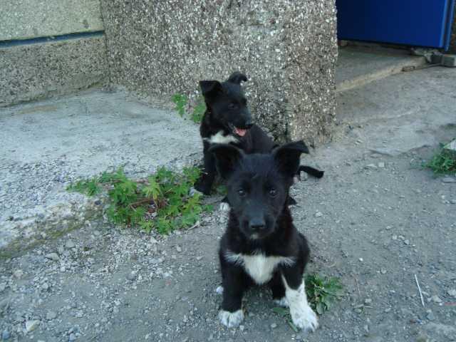 Маленькие собачки бесплатно в нижневартовске объявление из рук в руки недвижимость на 04*03*2009г продажа бизнеса ф