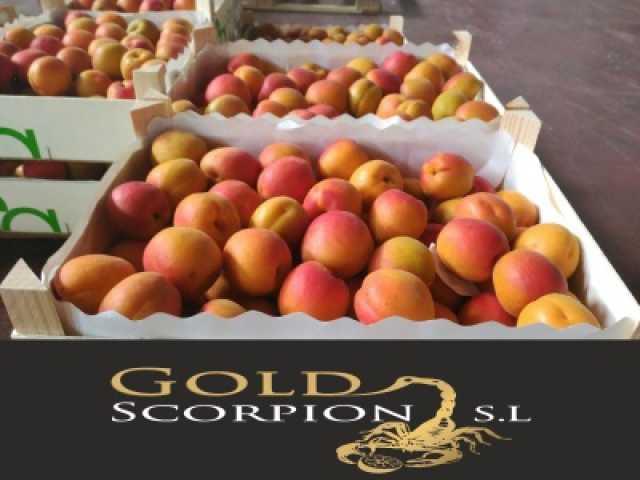 Продам Продаем абрикосы из Испании