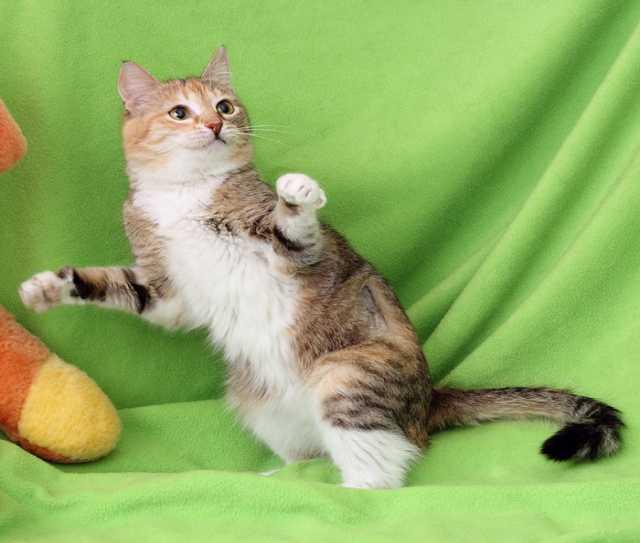 Отдам даром Кошка Мышка, милая камышка, 1г.