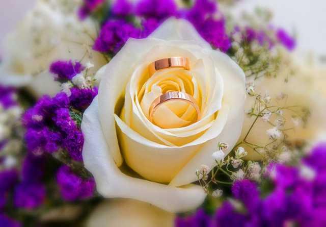 Предложение: Свадебное фото,видео  съёмка,тамада