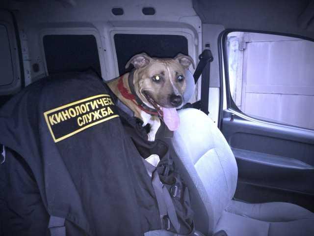 Предложение: Дрессировка собак в Вашем городе!