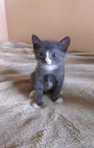 Отдам даром Возьмите котёночка в добрые руки!!!