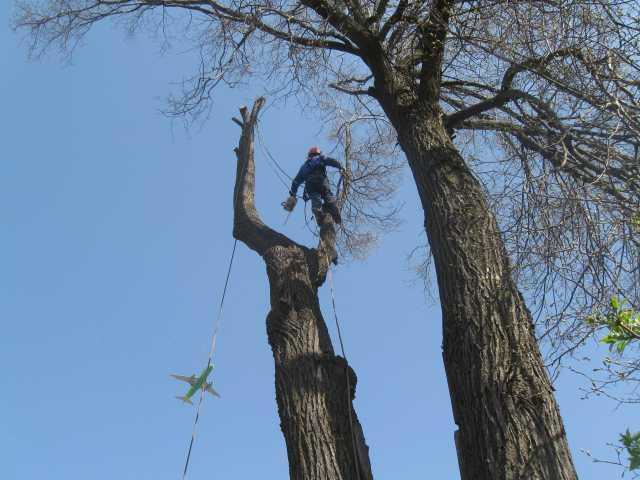 Предложение: Спилить деревья в Ступинском районе