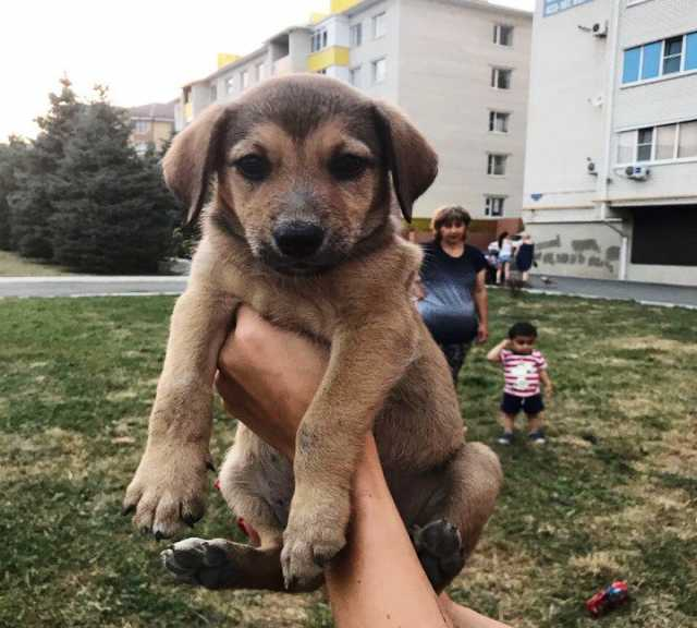 Отдам даром Симпатичные и умные щенки в добрые руки