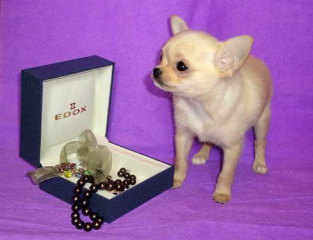 бытовой встраиваемой щенки чихуахуа в балаково любую модель ВАЗ