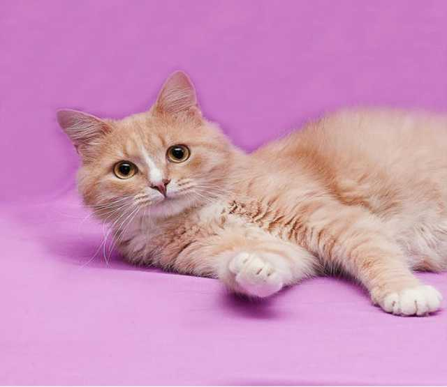 Отдам даром Шикарный рыжий кот Мартин.