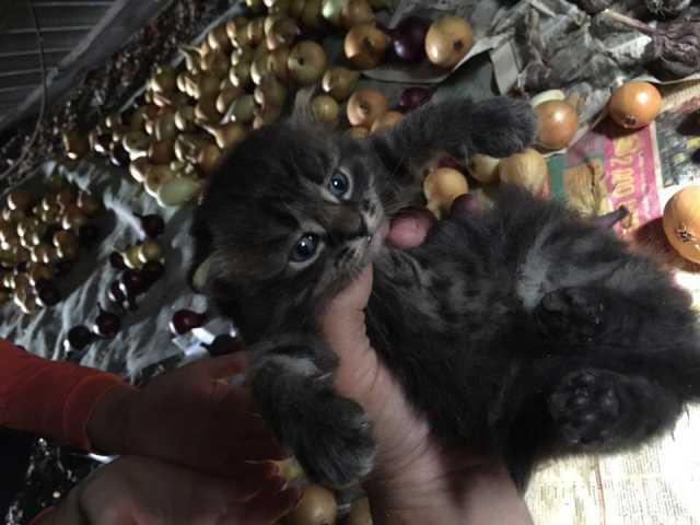 Отдам даром Чудесные котята ищут дом