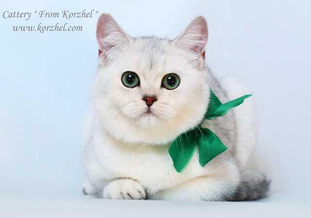 Дать бесплатное объявление о продаже котят в прокопьевске подать бесплатное объявление о работе кемерово