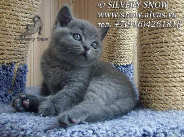 Продажа котят частные объявления в омс подать новое объявление работа для домохозяек 2