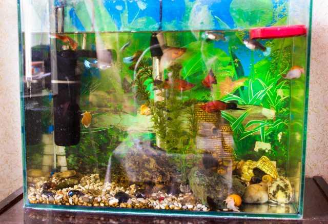 Куплю продам частные объявления аквариум работа в анне свежие вакансии