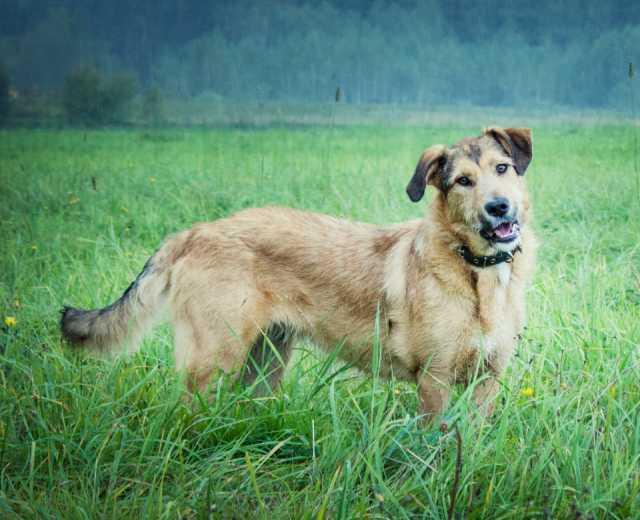 Отдам даром Руфина - уютная собака ищет дом
