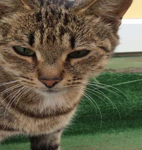 Отдам даром: Отдам кошку