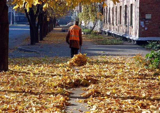 Предложение: Уборка и вывоз листвы