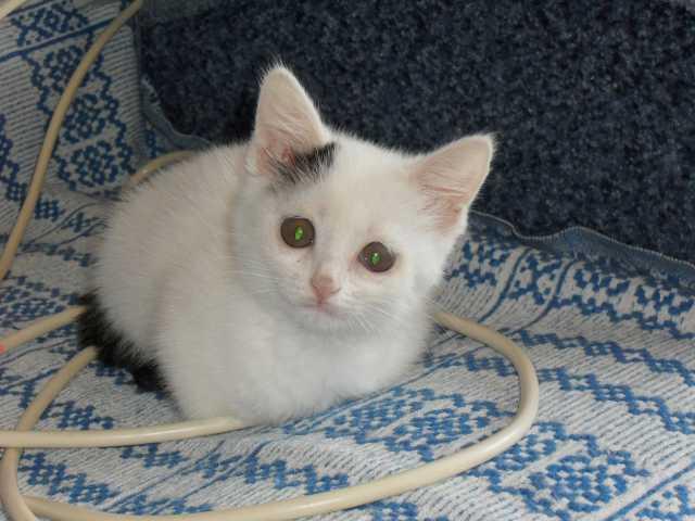 Отдам даром: Кошечку