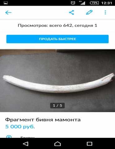 Продам Бивень мамонта