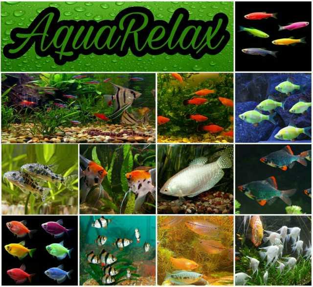 Продам Рыбки аквариумные на любой вкус