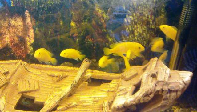 Продам Аквариум 280 л с рыбами