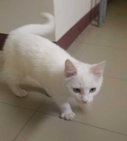 Отдам даром Ласковый, игривый котёнок ищет дом