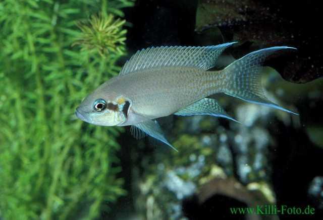 Куплю аквариумных рыбок в барнауле объявления продажа действующего бизнеса в братске
