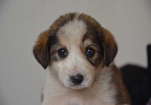 Подать бесплатное объявление о продаже щенков в городе калининграде дать объявление страняется