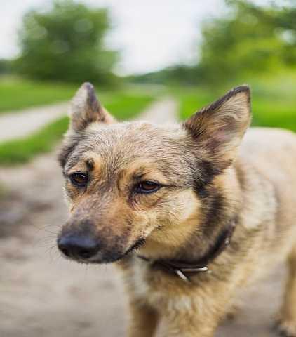 Отдам даром Активная  собака Дэйзи верит в свой счас