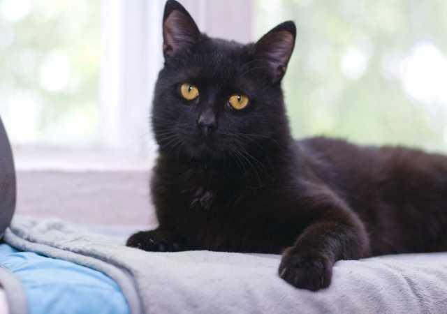 Отдам даром Ищет дом милый котик Котя!