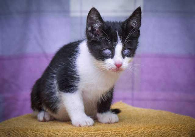 Отдам даром Очаровательный котенок ищет дом